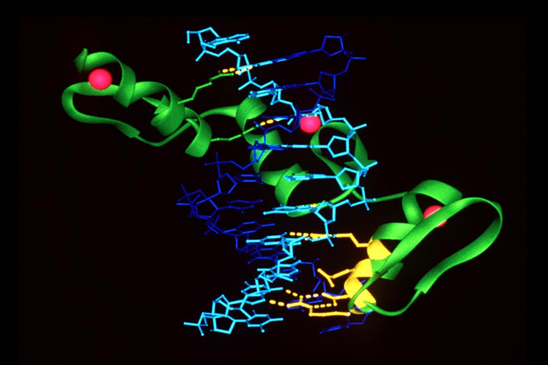 Una nueva terapia molecular que elimina la expresión del gen mutado de HTT
